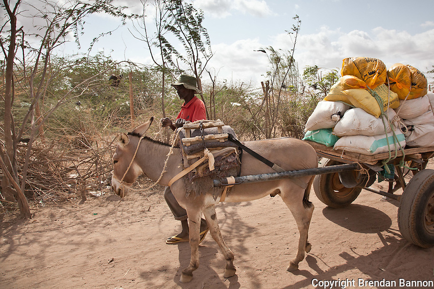 A new Somali arrival carries rations back to his temporary shelter in Dadaab refugee camp in northern Kenya.
