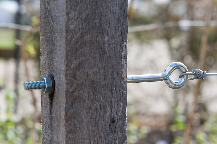 An eye bolt set into a wooden post allows for the adjustment of tension in a horizontal wire used for supporting fruit.
