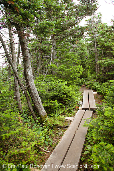 Bog bridge along the Appalachian Trail (Franconia Ridge Trail) in the White Mountains of New Hampshire USA during the summer months.