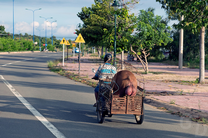 The interesting things you see on the rural roads in Vietnam