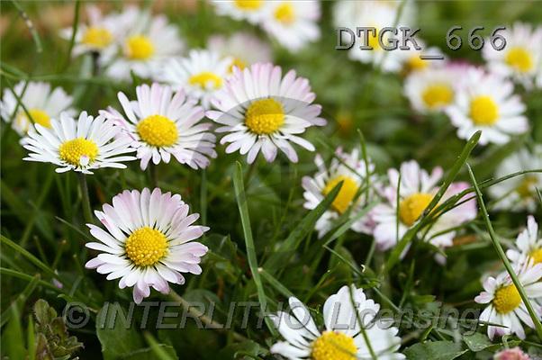 Gisela, FLOWERS, photos(DTGK666,#F#) Blumen, flores, retrato