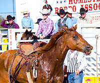 Loos Horse during Saddle Bronc Riding at 65th year of The Homestead Rodeo, Homestead, FL, on January 26, 2014