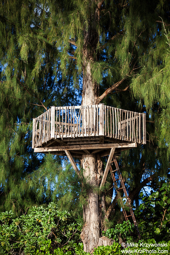Tree House on the North Shore of Oahu, Hawaii