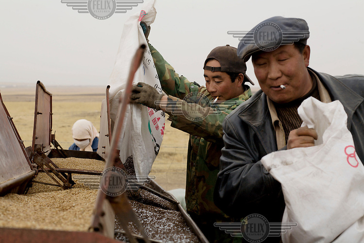 Smoking farmers prepare seed and fertilizer to be ploughed near Qinghai Lake.