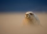 Seal Spectacular