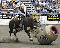"29 Aug 2004: PRCA Rodeo Bull Rider Matt Austin ranked 7th in the world riding ""Out of Here"" during the PRCA 2004 Extreme Bulls competition in Bremerton, WA."