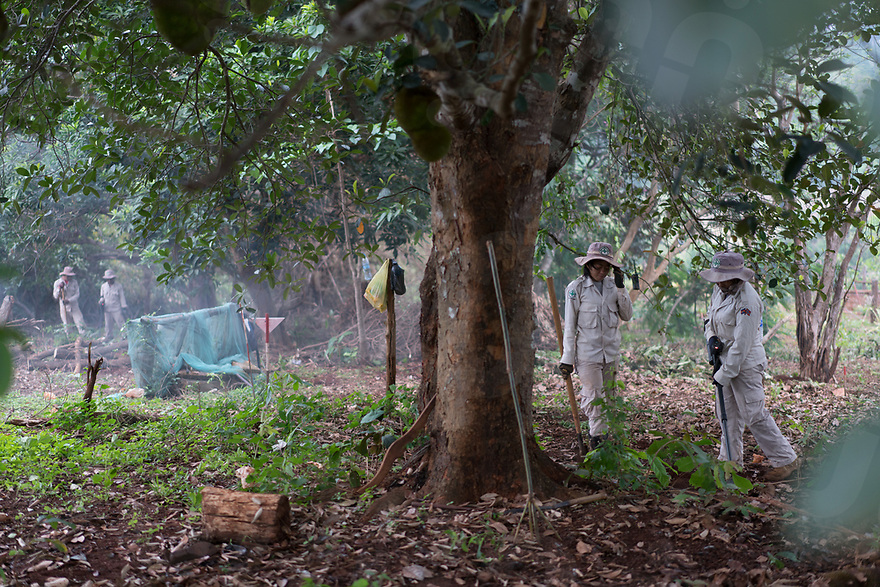 April 27, 2017 - Banlung (Cambodia). Members of the NPA team clear an area inside a cassava field a few meters away from a group of houses in the provincial capital, Banlung. Estimates stat that around 2.7 million bombs were dropped over Cambodia by the U.S. between 1963 and 1975 and around 30% failed to detonate.  © Thomas Cristofoletti / Ruom