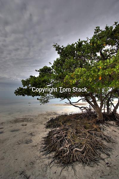 Low tide, Islamorada, Florida Keys