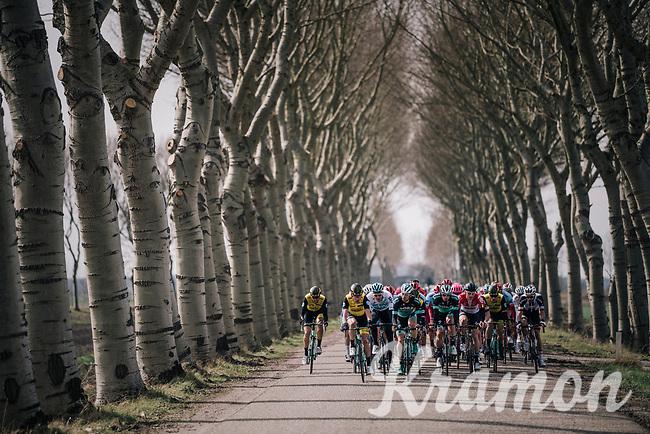 natural corridor for the peloton<br /> <br /> 106th Scheldeprijs 2018 (1.HC)<br /> 1 Day Race: Terneuzen (NED) - Schoten (BEL)(200km)