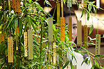 A member of staff wearing traditional Japanese kimono looks at a bamboo tree decorated with gold and platinum paper strips (Tanzaku) in Ginza, Tokyo on July 3, 2015. It is Japanese custom to write a wish on a paper strip and hang this on a tree to celebrate the annual festival of Tanabata. After the festival the store will offer the gold and platinum strips to the Akasaka's Hie-jinja shrine. (Photo by Rodrigo Reyes Marin/AFLO)
