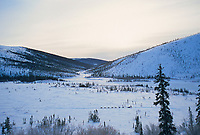 1000 mile Yukon Quest dogmusher travels the trail to Whitehorse, Canada, Steese mountains, 100 miles from Fairbanks, Alaska