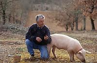 """Europe/France/Midi-Pyrénées/46/Lot/Causse de Limogne/Lalbenque: Mr Raymond Boisset et son cochon """"Kiki"""" lors d'un cavage (recherche des truffes) - AUTORISATION N°255"""