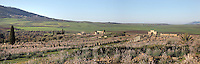 View of Volubilis, on a fertile plain in Northern Morocco, with wildflowers in bloom, with the columns of the Forum along the Decumanus Maximus and the Triumphal Arch of Caracalla, 217 AD, on the right and the Basilica, 217 AD, in the distance. Volubilis was founded in the 3rd century BC by the Phoenicians and was a Roman settlement from the 1st century AD. Volubilis was a thriving Roman olive growing town until 280 AD and was settled until the 11th century. The buildings were largely destroyed by an earthquake in the 18th century and have since been excavated and partly restored. Volubilis was listed as a UNESCO World Heritage Site in 1997. Picture by Manuel Cohen