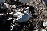 BIRD ROMANCE