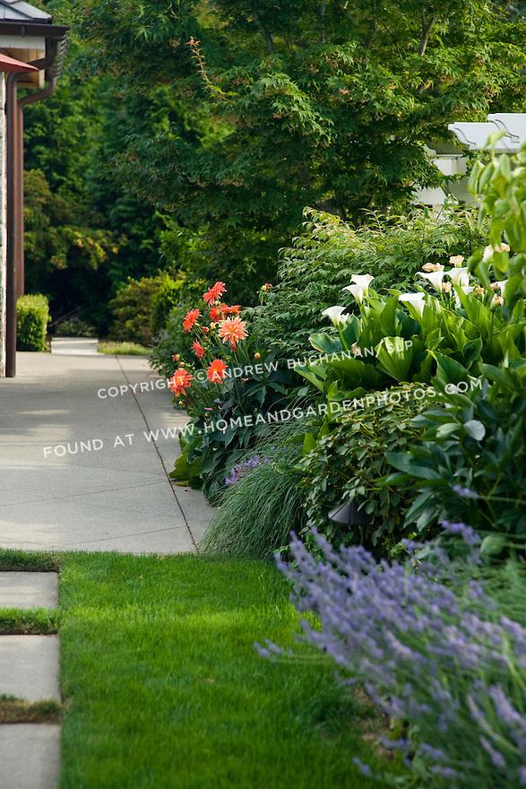 a summer border of cala lilies, dahlia, shrubs, and lavender, edges a poolside patio in suburban Seattle