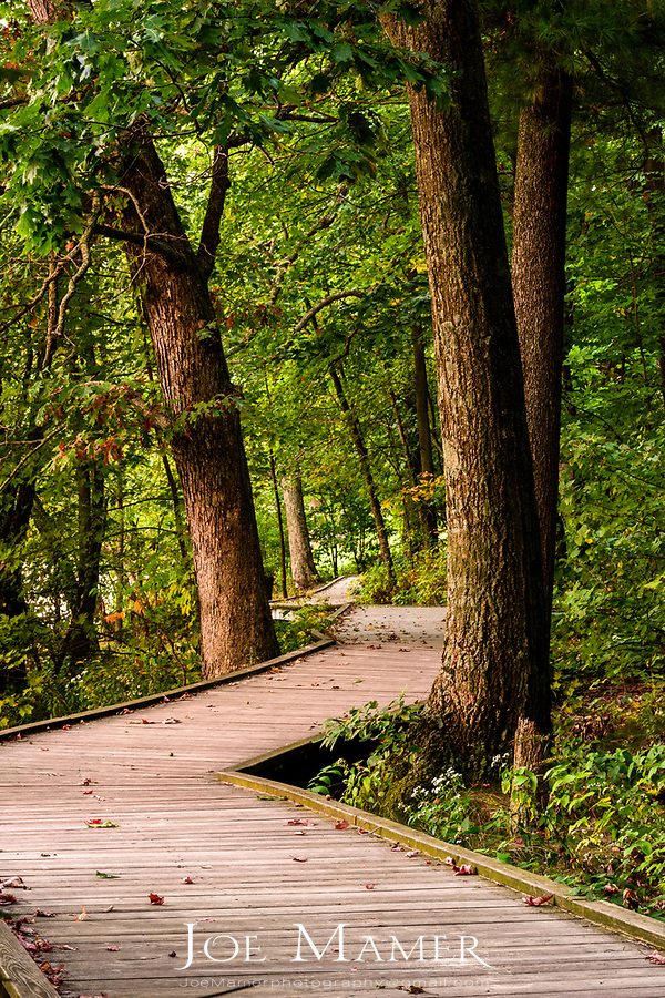 Board walk through the forest at Devil's Lake State Park.