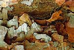 Katydid on bark, Peru