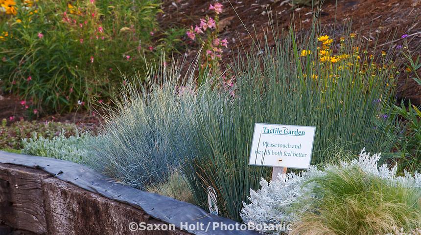 Therapeutic tactile garden for easy access with Community Garden of Healdsburg Senior Living Center, California