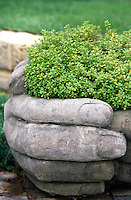 A giant concrete hand clasps a bush of thyme