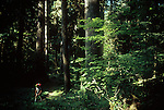 Olympic National Park, Hoh River Trail, Male Hiker, Old growth conifir forest, Olympic Peninsula, Washington State, Pacific Northwest,