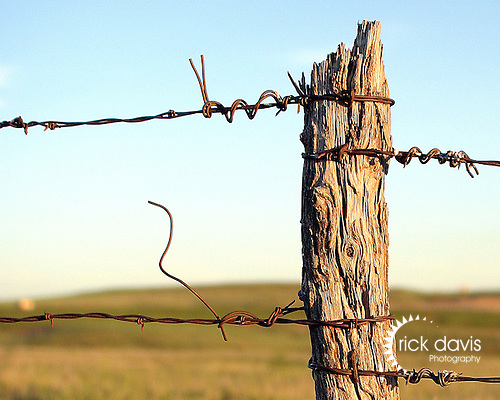 These old cedar fence posts are disappearing from the Colorado prairie as development ushers in new uses for the once productive land.