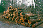 Eastern White Pine Logs<br />