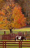 A pinto-painted horse stands in the pasture of a farm in Banner Elk, North Carolina.