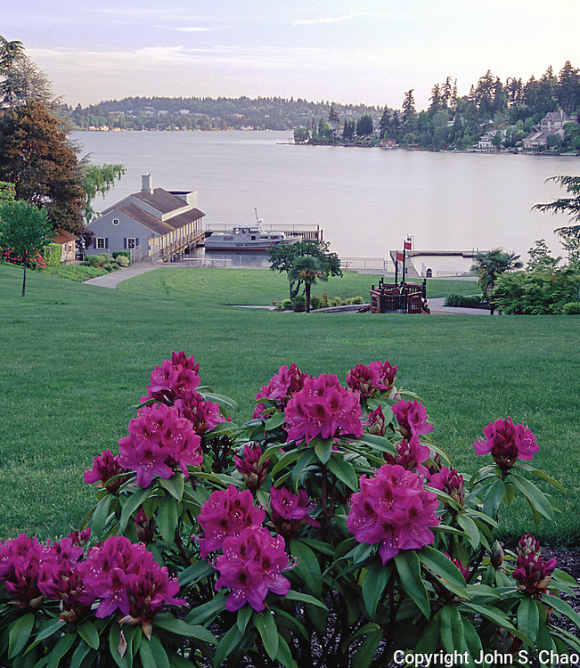 View of Clyde Beach Park on Lake Washington in spring with flowering rhododendrons in foreground and boathouse in background. Bellevue, Washington.