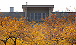 McGowan South above a canopy of fall foliage, Wednesday, Oct. 31, 2018. (DePaul University/Jeff Carrion)
