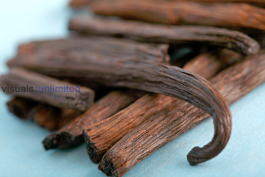 Vanilla fruits, in old medicinal literature, are described as an aphrodisiac and a remedy for fevers. Studies have shown that vanilla does increase levels of adrenaline and as such can also be considered mildly addictive. Royalty Free
