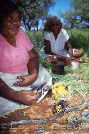 Aboriginal women from Atitjere cooking and eating bush bananas and dragon lizard over fire. Harts Range, NT