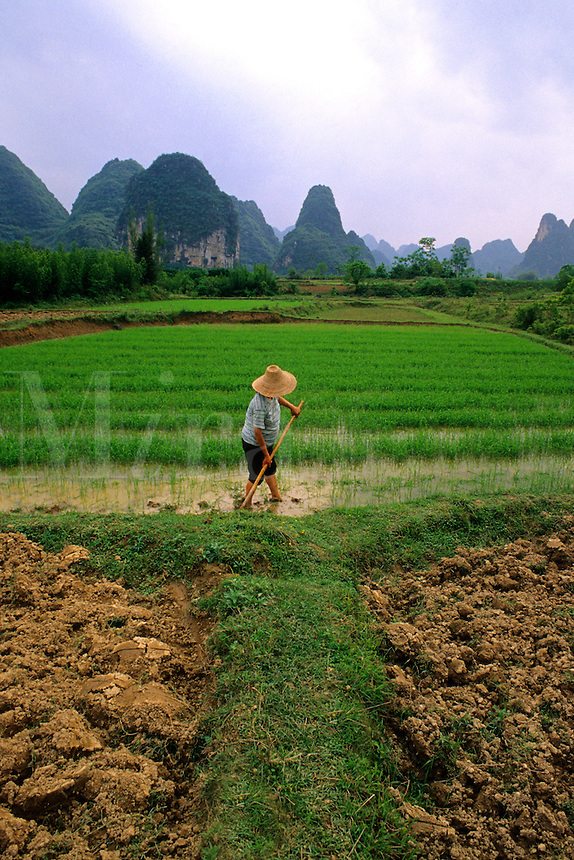 Farmer in rice fields in Southern China Guilin and Yangshou