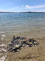 Ocean heart by Sierra Mason Grade 1b, Yarmouth Maine