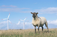 DEUTSCHLAND Schleswig-Holstein, Insel Pellworm, Schafe auf Deich und AN-Bonus Windraeder,  AN-Bonus gehoert heute zur Siemens Gruppe / Germany, Northsea eco island Pellworm, sheep and AN Bonus windturbine
