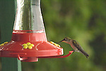 Humming bird at feeder