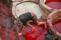 High angle view of a tanner, climbing from a pit; his legs and arms are still dripping with poppy flower dye whose colour blends with the sunlight, Chouara Tannery, Fez, Morocco, pictured on February 25, 2009 in the evening. The Chouara tannery is the largest of the four ancient tanneries in the Medina of Fez where the traditional work of the tanners has remained unchanged since the 14th century. It is composed of numerous dried-earth pits where raw skins are treated, pounded, scraped and dyed. Tanners work in vats filled with various coloured liquid dyes derived from plant sources. Colours change every two weeks, poppy flower for red, mint for green, indigo for blue, chedar tree for brown and saffron for yellow. Fez, Morocco's second largest city, and one of the four imperial cities, was founded in 789 by Idris I on the banks of the River Fez. The oldest university in the world is here and the city is still the Moroccan cultural and spiritual centre. Fez has three sectors: the oldest part, the walled city of Fes-el-Bali, houses Morocco's largest medina and is a UNESCO World Heritage Site;  Fes-el-Jedid was founded in 1244 as a new capital by the Merenid dynasty, and contains the Mellah, or Jewish quarter; Ville Nouvelle was built by the French who took over most of Morocco in 1912 and transferred the capital to Rabat. Picture by Manuel Cohen.