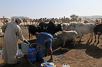 Toubou women and children with their cattle around the Terkei well