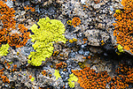 Lichen in the hills along the John Day river, near Clarno, Oregon