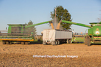 63801-07203 Farmer harvesting soybeans, Marion Co., IL