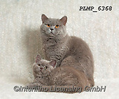 Marek, ANIMALS, REALISTISCHE TIERE, ANIMALES REALISTICOS, cats, photos+++++,PLMP6368,#a#, EVERYDAY