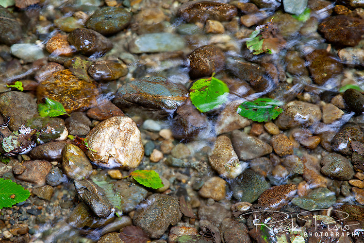Rocks and pebbles make up the bed of Home Creek as it flows through Fern Canyon in Northern California's Prairie Creek Redwoods State Park. Prairie Creek Redwoods State Park is located in Humboldt County, California, 50 miles north of Eureka near the town of Orick, and is a coastal sanctuary for old-growth Coast Redwood trees.