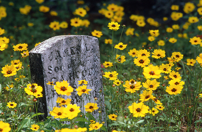 Flowers in Old Cemetery