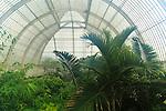 Inside The Palm House at Royal Botanic Gardens, Kew, London, England, UK