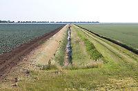Large farm drain and conservation margins - Lincolnshire, July
