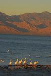 Salton Sea State Rec. Area, CA