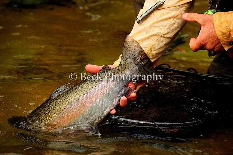Steelhead fishing on the Salmon River in New York
