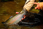 Steelhead fishing on the Salmon River in New York