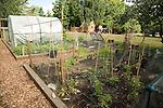 Smallholding vegetable garden, Shottisham, Suffolk, England