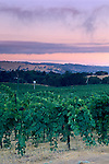 Morning light over vineyards near Plymouth, Shenandoah Valley, Amador County, California