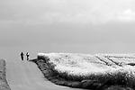 Europa, DEU, Deutschland, Nordrhein Westfalen, NRW, Rheinland, Niederrhein, Juechen, Agrarlandschaft, Bluehende Rapsfelder, Raps, Radfahrer, Fahrradfahrer, Fruehling, Weg, Strasse, Kategorien und Themen, Landwirtschaft, Landwirtschaftlich, Agrar, Agrarwirtschaft, Natur, Naturfoto, Naturfotos, Naturfotografie, Naturphoto, Naturphotographie, Landschaft, Landschaften, Landschaftsfoto, Landschaftsfotografie, Landschaftsphoto, Landschaftsphotographie<br /> <br /> <br /> [Fuer die Nutzung gelten die jeweils gueltigen Allgemeinen Liefer-und Geschaeftsbedingungen. Nutzung nur gegen Verwendungsmeldung und Nachweis. Download der AGB unter http://www.image-box.com oder werden auf Anfrage zugesendet. Freigabe ist vorher erforderlich. Jede Nutzung des Fotos ist honorarpflichtig gemaess derzeit gueltiger MFM Liste - Kontakt, Uwe Schmid-Fotografie, Duisburg, Tel. (+49).2065.677997, schmid.uwe@onlinehome.de, www.image-box.com]